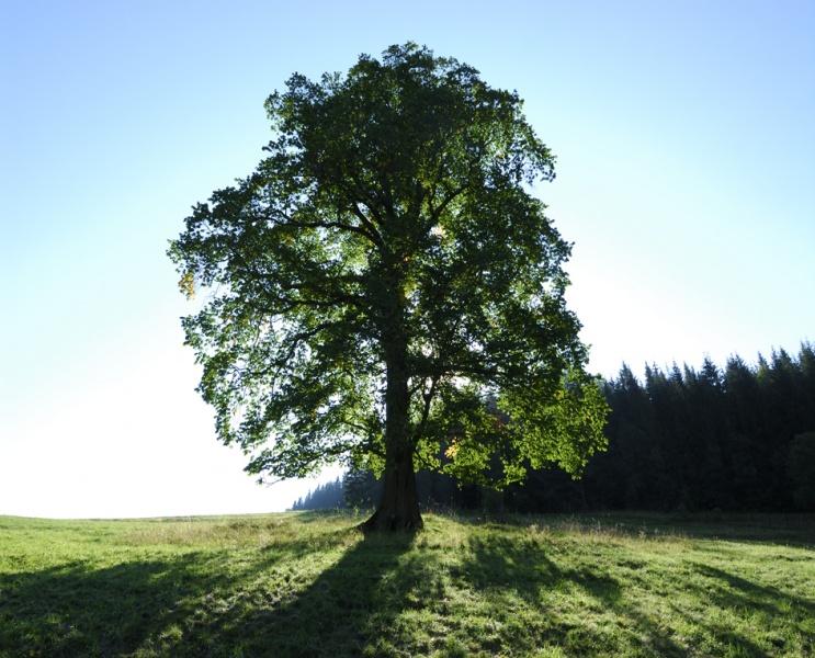 Strom - svetapple.sk