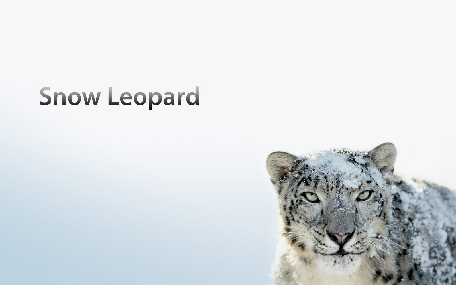 OS X Snow Leopard - SvetApple.sk