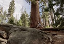 iPhone 11 Pro Cinematic Video Footage (shot in Sequoia National Park) - svetapple.sk