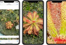 iOS 14: Apple povolilo väčšie približovanie záberov v aplikácii Fotky.